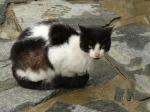 pisici-athonite-bogdan-munteanuk (1)