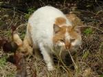 pisici-athonite-bogdan-munteanuk (10)