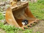 pisici-athonite-bogdan-munteanuk (12)