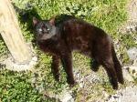pisici-athonite-bogdan-munteanuk (13)