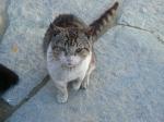 pisici-athonite-bogdan-munteanuk (14)