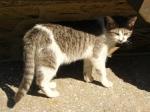 pisici-athonite-bogdan-munteanuk (15)