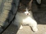 pisici-athonite-bogdan-munteanuk (16)