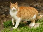 pisici-athonite-bogdan-munteanuk (2)