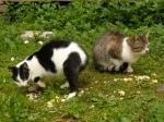 pisici-athonite-bogdan-munteanuk (3)