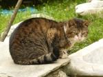 pisici-athonite-bogdan-munteanuk (4)