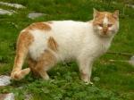 pisici-athonite-bogdan-munteanuk (5)