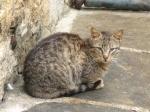 pisici-athonite-bogdan-munteanuk (6)