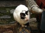 pisici-athonite-bogdan-munteanuk (7)