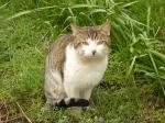 pisici-athonite-bogdan-munteanuk (8)