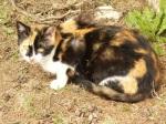 pisici-athonite-bogdan-munteanuk (9)