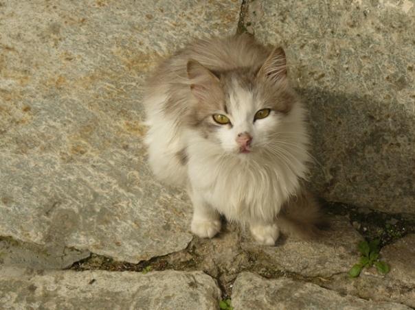 pelerinaj-la-muntele-athos-bogdan-munteanuk (74)