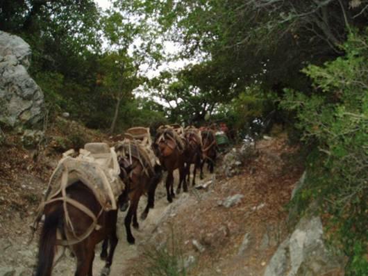 Caravană de catâri pe potecă