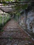 Kiwi garden at Simonos Petras 2