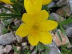 Spring Flowers in teh Fall 2
