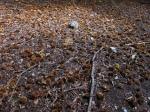 Through the chestnut forest
